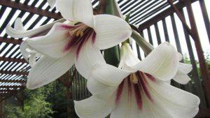 flowers-springopener